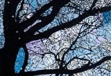 Derrière les branches / 20x20 cm / 2014 / Acrylique Collage Encre