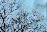 Jour d'hiver / 20x20 cm / 2014 / Acrylique Collage Encre